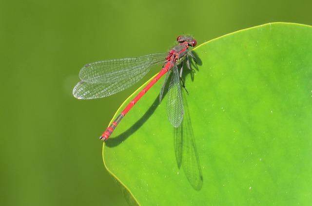 dragonfly-2393328_640