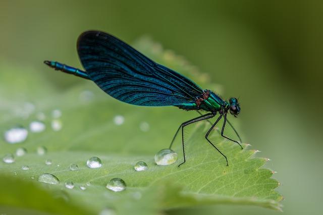 dragonfly-2441580_640