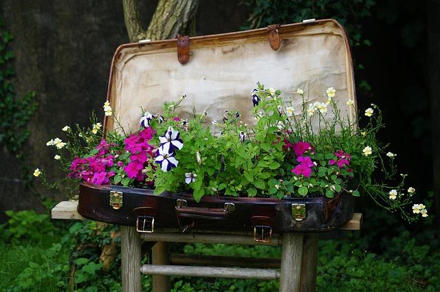 Eksotične rastline kot spominek predstavljajo tveganje