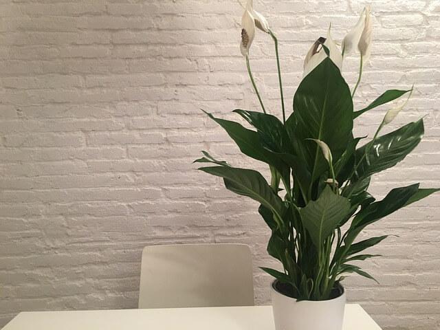 plant-1978269_640