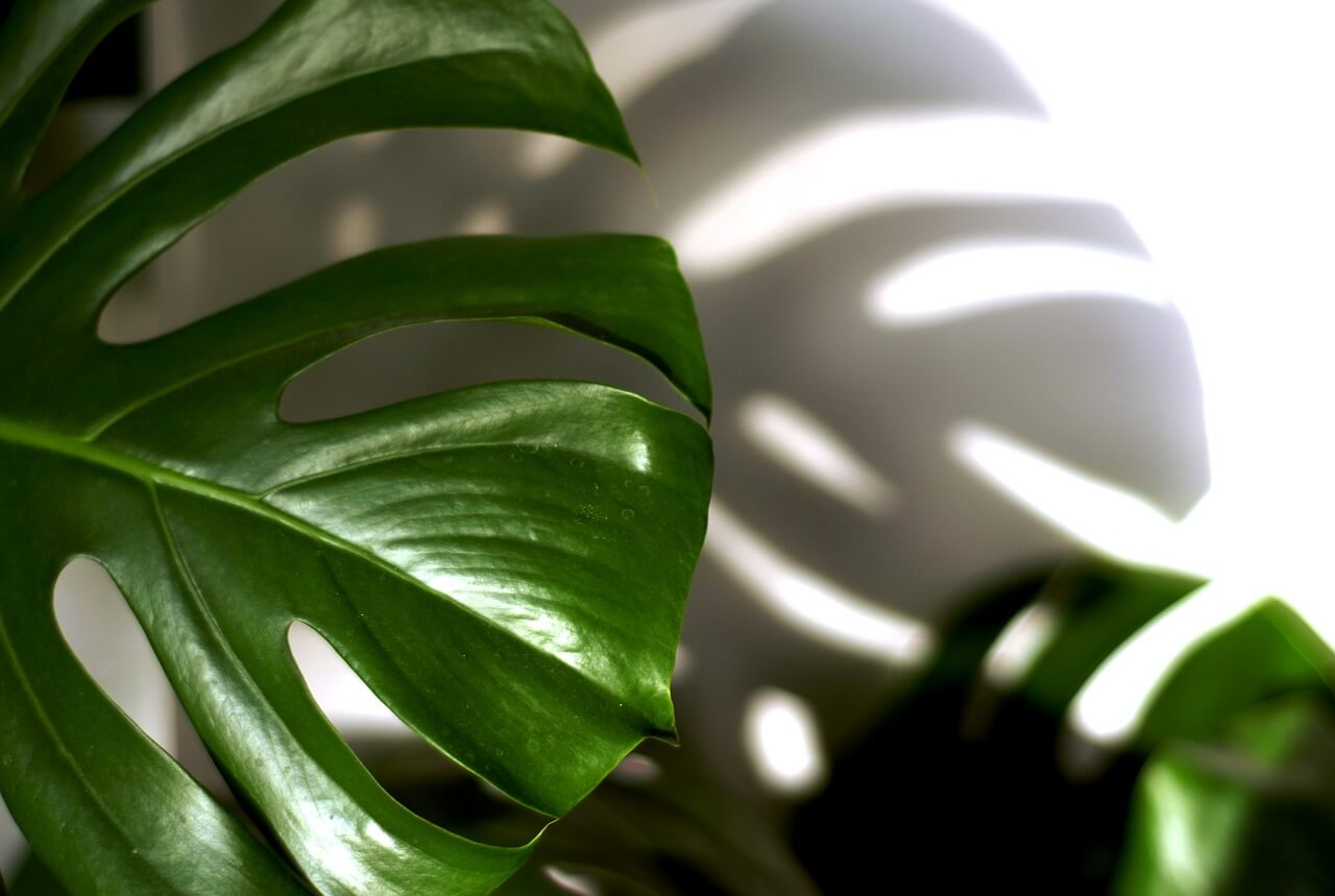 4 sobne rastline, ki prinašajo srečo