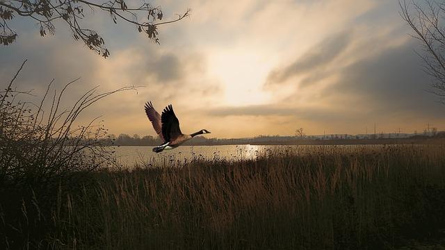 V soboto 'Mobilni kot ptice' - opazovanje ptic in narave na kolesarskem izletu
