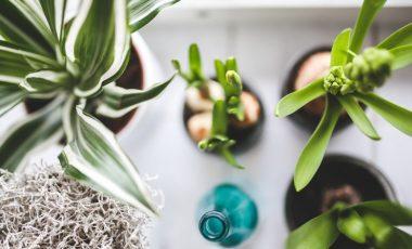 8 pravil za lepe sobne rastline