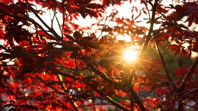 autumn-2808558_640