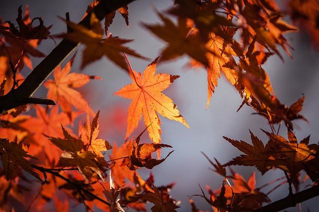 Zakaj se listje obarva?
