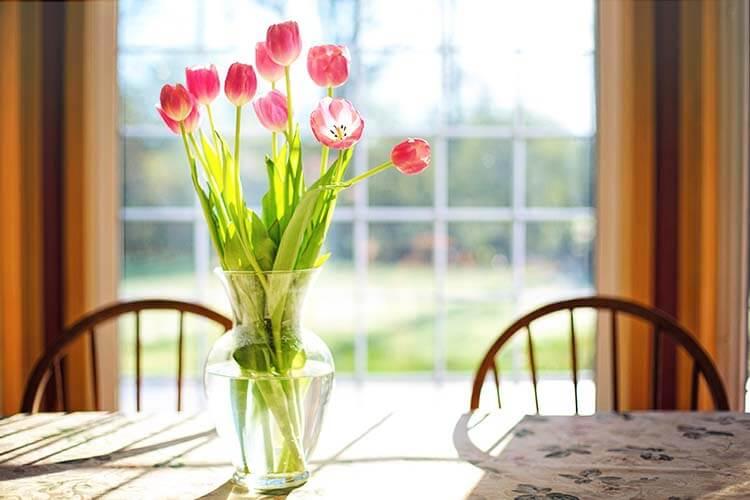 tulips-2239234_web
