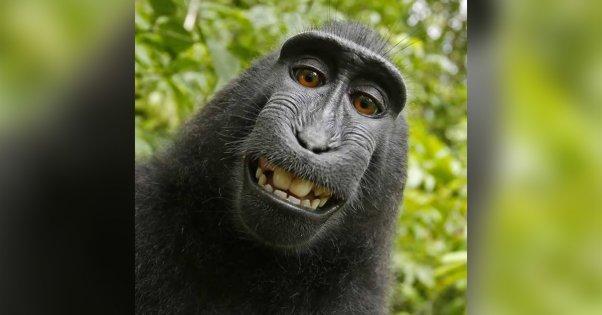 Osebnost leta organizacije PETA je Naruto - makaki opica