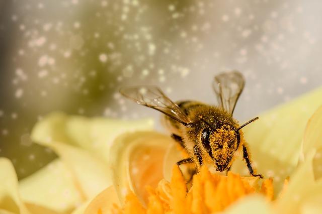 20. maj uradno razglašen za svetovni dan čebel