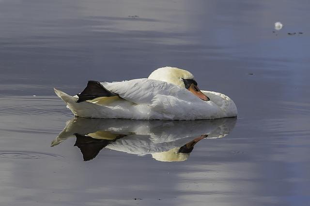 V Evropi vsako leto zaradi zastrupitve s svincem umre milijon ptic