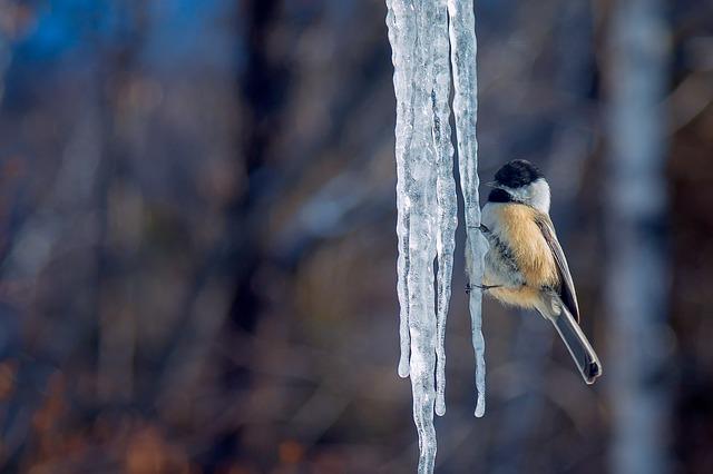 Hranjenje ptic v zimskem času