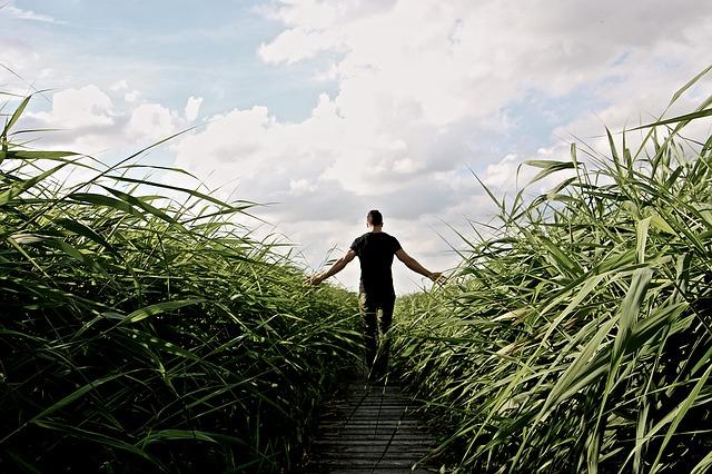 high-grass-1504284_640