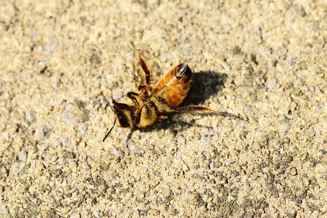 Svetovni dan čebel potrjen, kaj pa zaščita čebel pred pesticidi?