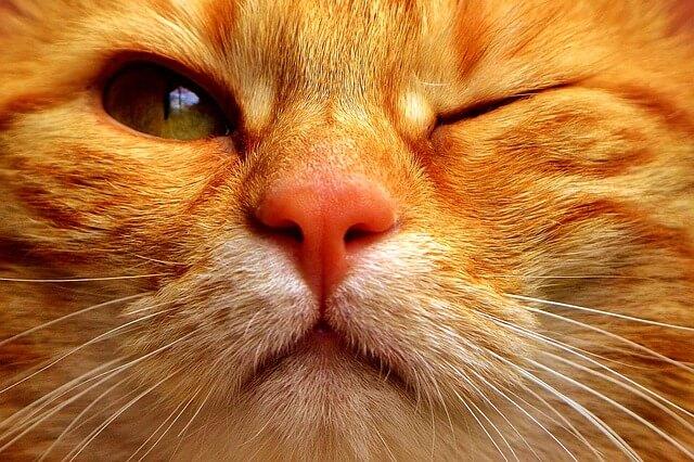 5 življenjskih lekcij, ki se jih lahko naučimo od mačk
