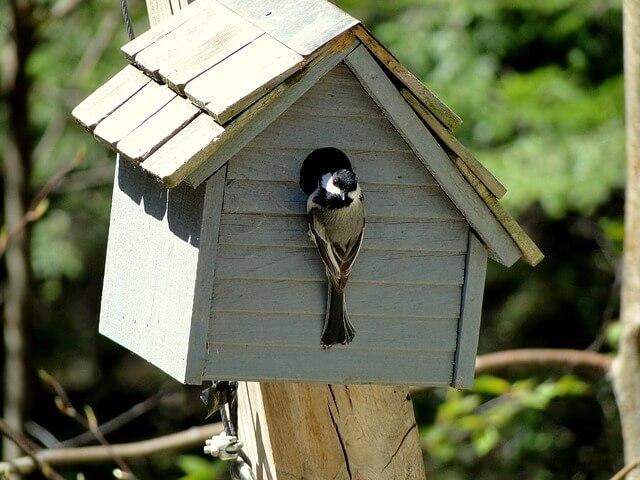 Na Stražiški tržnici danes v glavni vlogi Gregorjevo in ptice