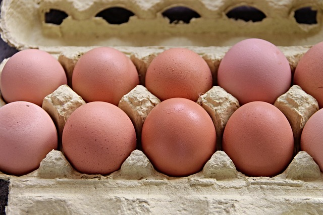 Oznake jajc in razlike pri reji kokoši nesnic