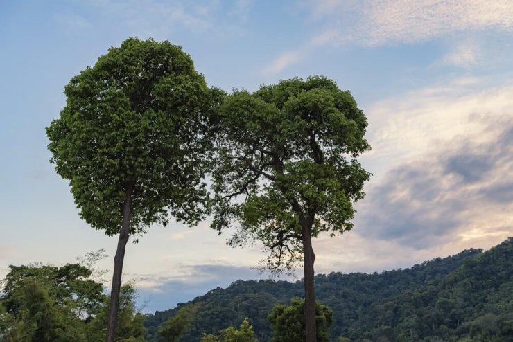Kako se drevesa pogovarjajo med seboj?