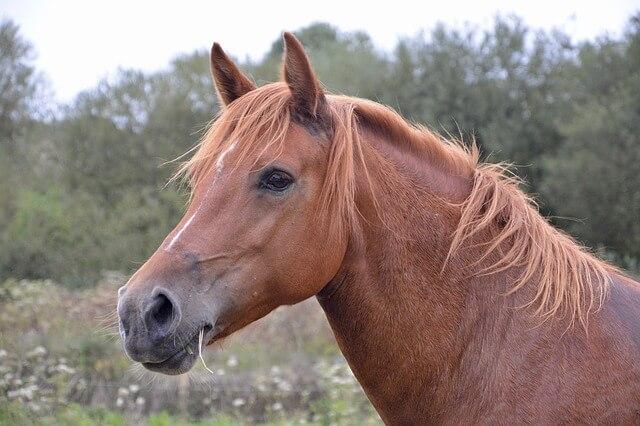 horse-mare-2737149_640