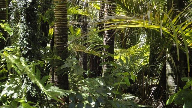 Amazonski gozd v Kolumbiji pridobil enake pravice, kot bi šlo za osebo