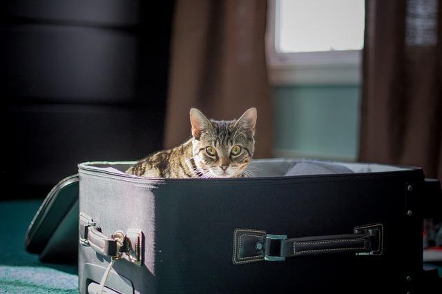 Mačje dogodivščine: en teden na letališču