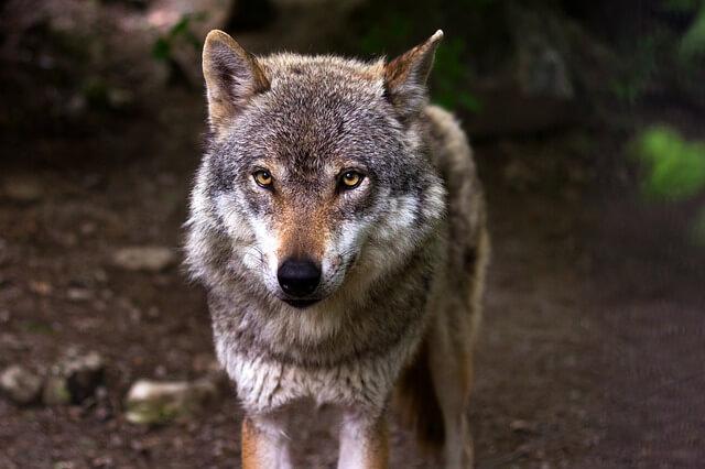 Na Rogli se je začel Svetovni kongres Ambasadorjev živali in narave