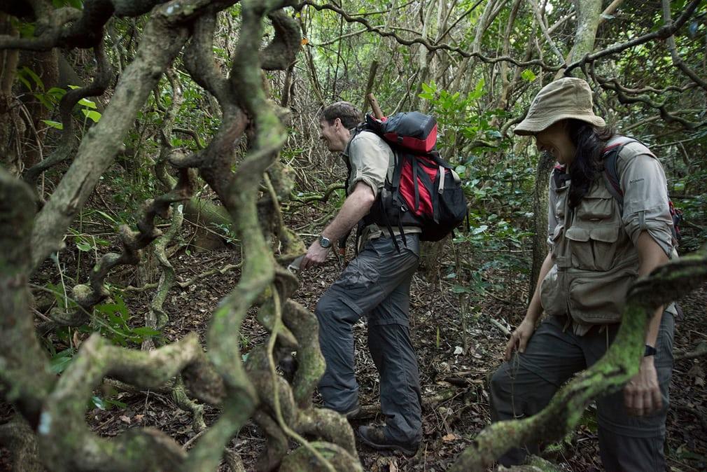 Skrivnostni deževni gozd v srcu afriškega vulkana