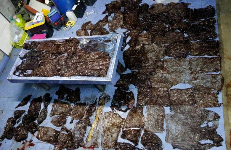 Umrli kit na Tajskem je imel v želodcu 80 vrečk