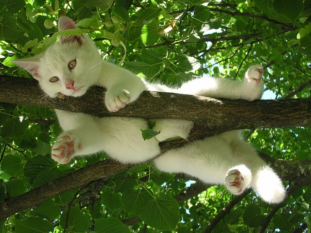 cat-212703_640