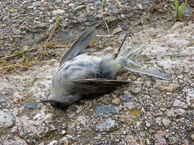 Nezakonito pobijanje ptic v Sloveniji: stanje je slabše, kot so mislili