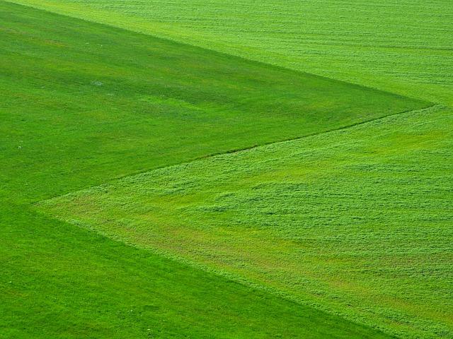 meadow-196567_640