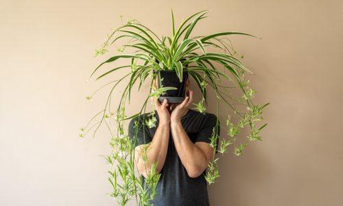 8 sobnih rastlin – glede na vašo osebnost