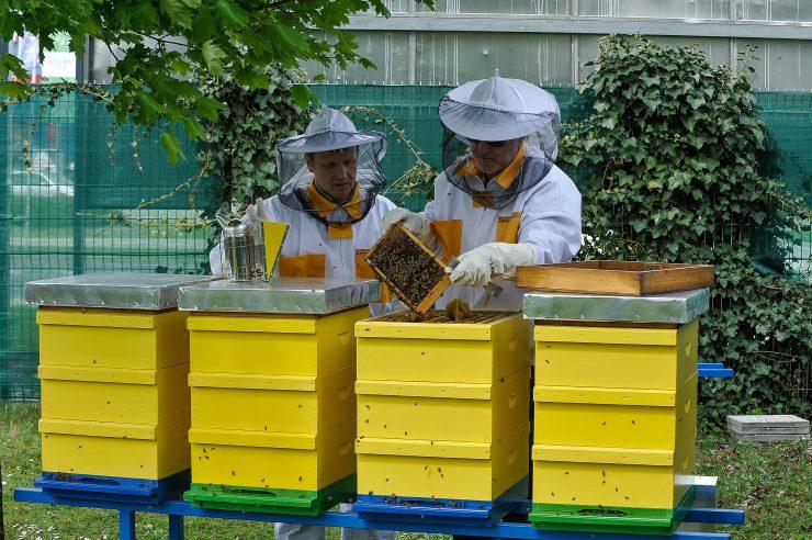 Projekt 'Pomagajmo čebelici - Ocvetličimo mesto' uvrščen v evropsko zbirko Urban Nature Atlas