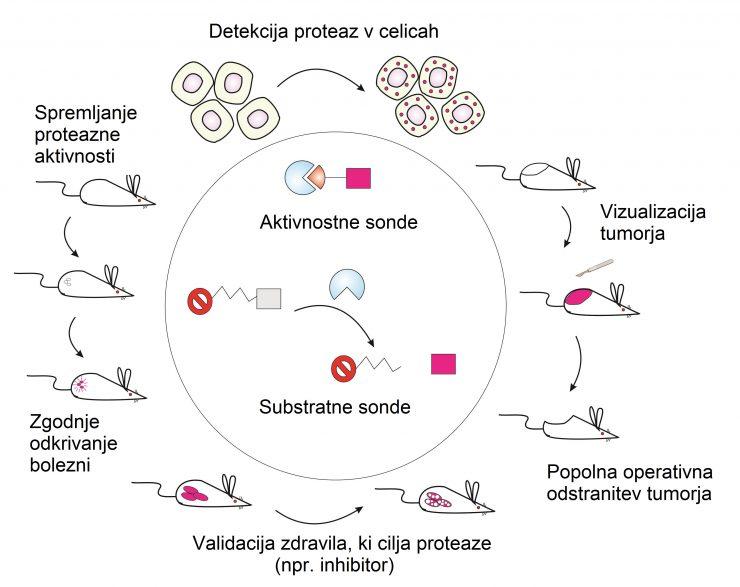 Pomembna dosežka slovenskih raziskovalcev na področju odkrivanja in zdravljenja raka
