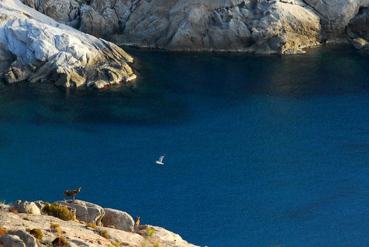 Otok Montecristo, ki ga lahko obiščete le 2x letno, je 'odprt'