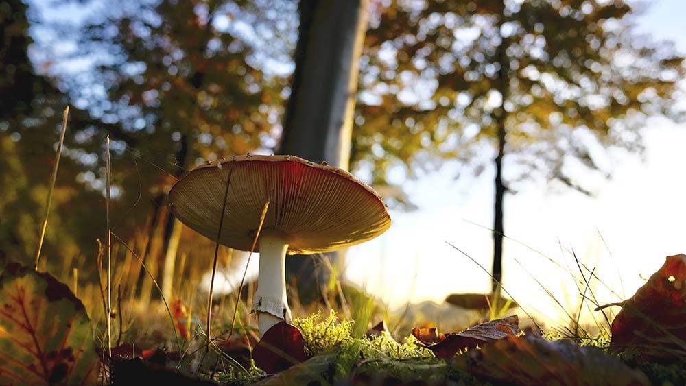 Ta jesen nagajiva že svoje znanilce razkriva