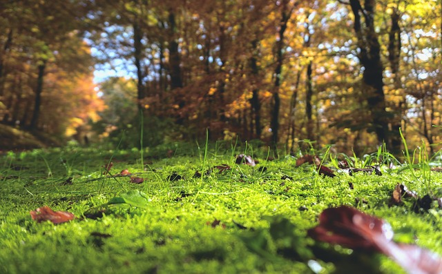 forest-floor-1031143_640