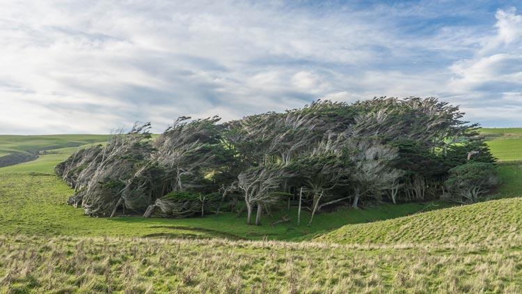 Nenavadni kraji: poševna drevesa – lepota, ki jo je ustvarila sila narave