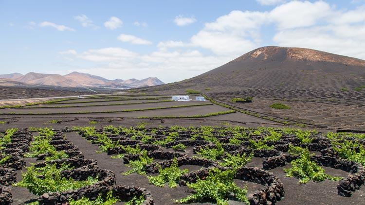 Nenavadni kraji: Vinogradi Lanzarote – čarobnost črnih vrtov