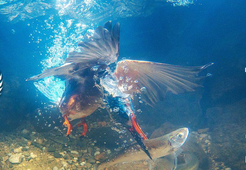 Ptice jezer - film o nekoč uničenem industrijskem območju, danes tam domujejo ptice