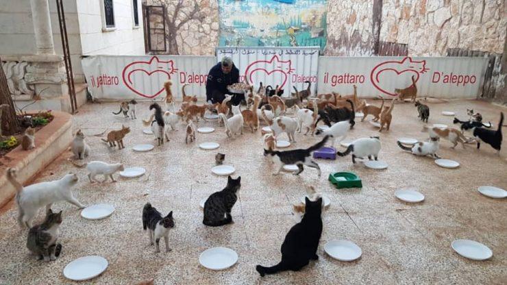 Foto: Ernesto's Sanctuary for Cats in Syria