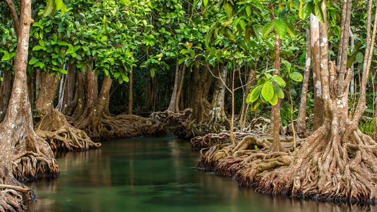 16 let svojega življenja posvetil drevesom in jih posadil kar 2 milijona