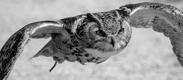eurasian-eagle-owl-1574166_640