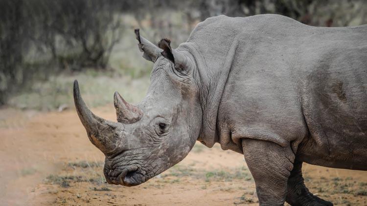 Živalske vrste, ki so izumrle v letu 2018 – ena tudi že leta 2019