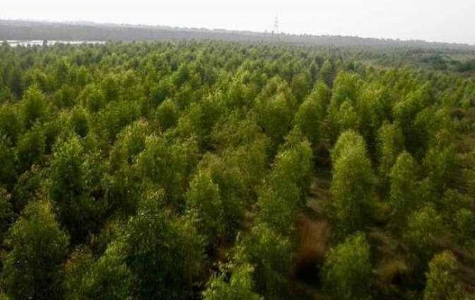Pakistan zasaja milijardo dreves