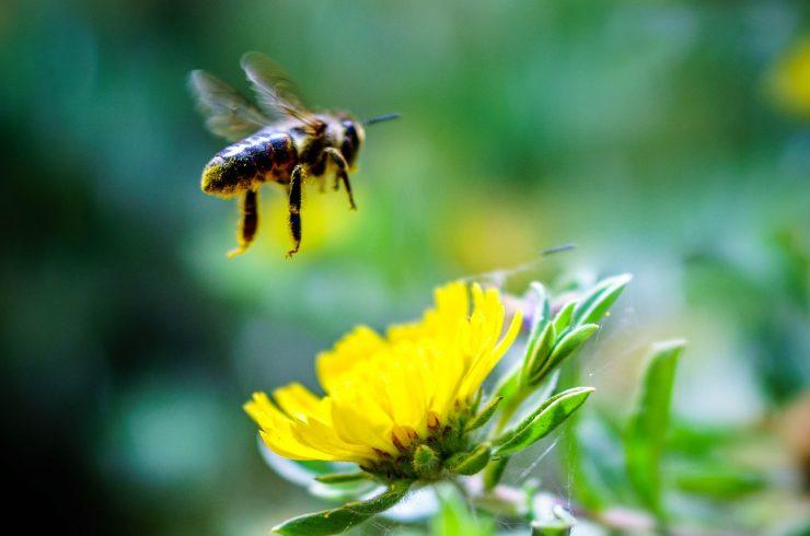 Fotografski natečaj: čebele
