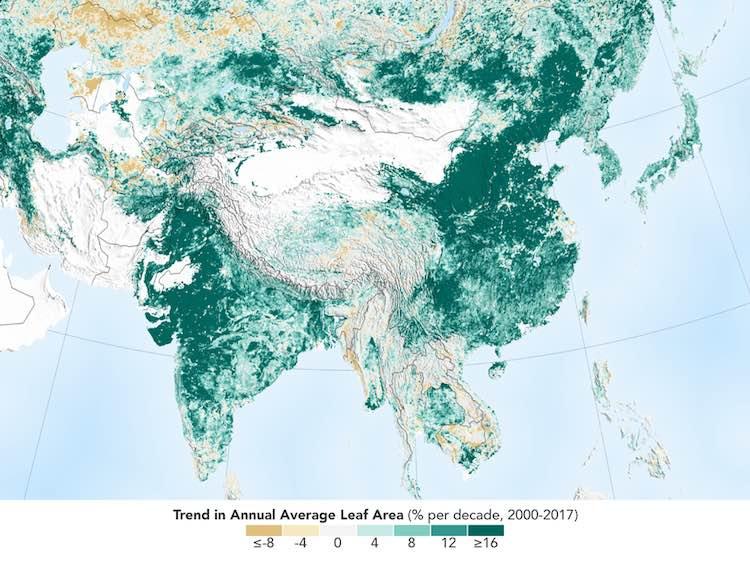 NASA poroča: Zemlja je bolj zelena kot pred 20 leti