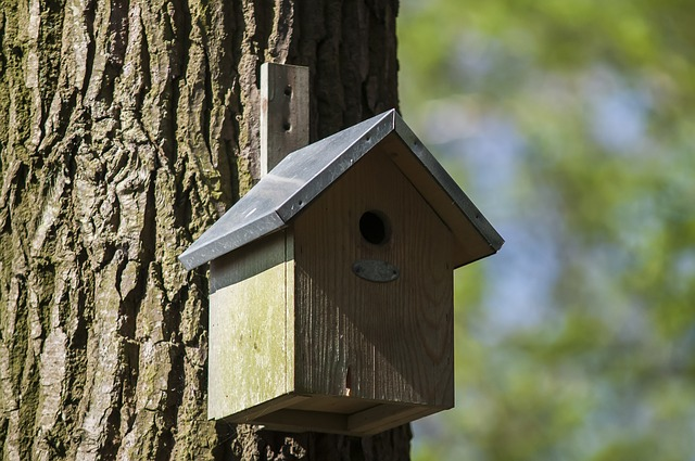 Jutri delavnica izdelave gnezdilnic za ptice