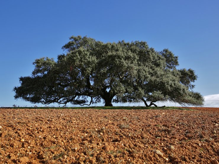 Foto: tree of the year