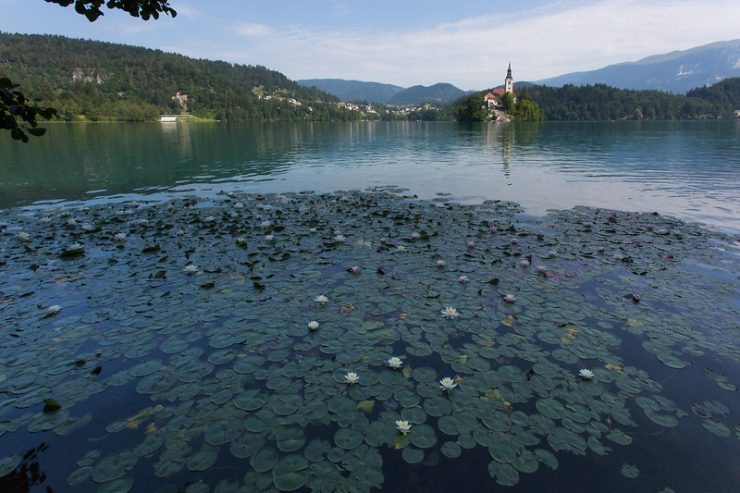 Bled na seznamu najboljših destinacij za ribolov v Evropi