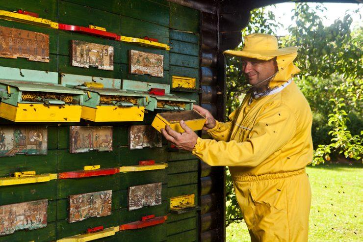 Slovenska čebelarska akademija išče inštruktorje