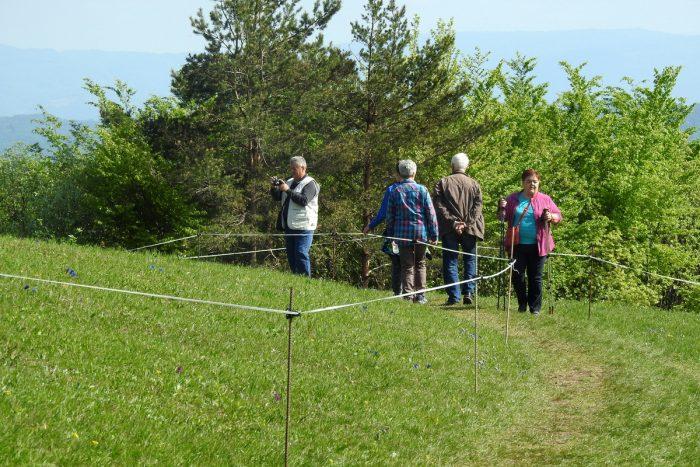 Vrvična ograja na Lovrencu, ki poleg planincev prostovoljcev varuje rastišče zavarovanega Clusijevega svišča (foto Dušan Klenovšek)